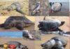 Sri Lanka sea turtles Dolphins Whale washed up on Sri Lankan shores - Marine Life Danger