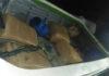 Sri Lanka Navy apprehends Kerala Ganja KG Cannabis worth around Rs. 39 million with 02 suspects