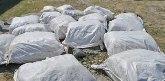 Sri Lanka Navy apprehends a suspect with smuggled stock of Kendu leaves and dried turmeric