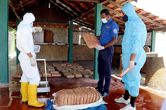 Sri Lanka Navy takes hold of Kerala Ganja KG Cannabis worth over Rs 125 million